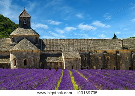 Abbey Of Senanque And Blooming Rows Lavender Flowers. Gordes, Luberon, Vaucluse, Provence, France, E