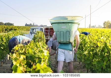 Workers In Vineyards, France