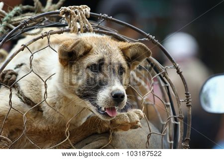 The Dog Trade In Vietnam Market