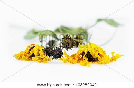 Dried Arnica Herbs