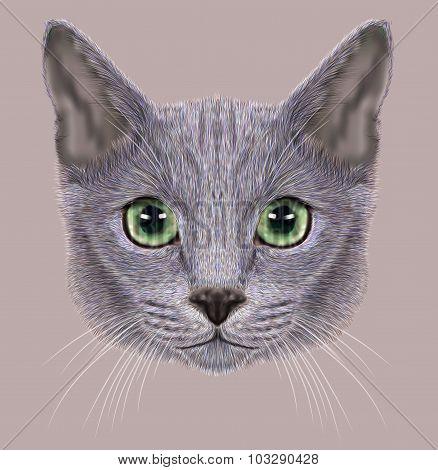 Illustration of Portrait of Russian Blue Cat