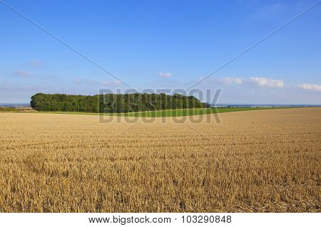 Wolds View And Small Copse