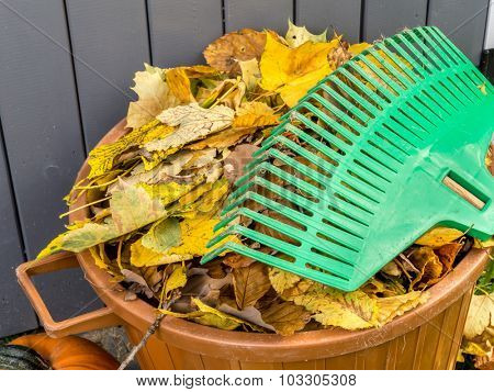 Pile of dead fall leaves swept and dumped into plastic bin with fan rake resting on it