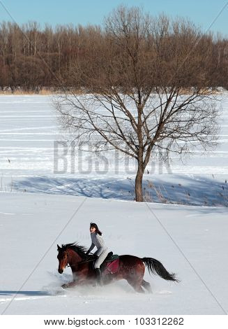 Beautiful equestrian woman ride horse in the winter woods
