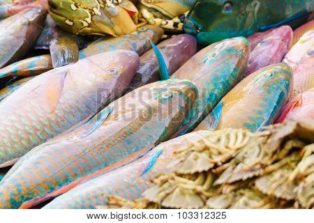 Parrotfish At Market Display Ready To Be Cook For Dinner.