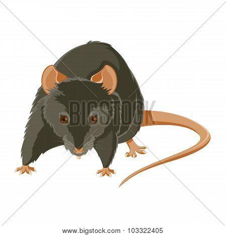 Evil rat