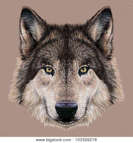 Illustration Portrait of a Wolf