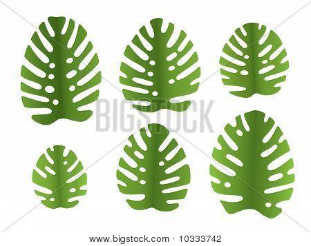 Leaves Of Monstera