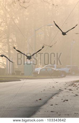 Buzzards Flying Away