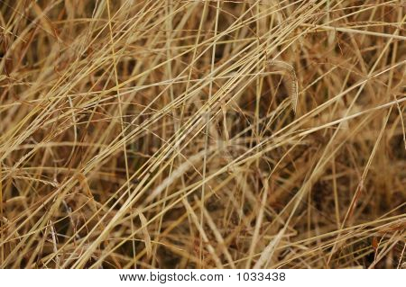 Dried Weeds In The Garden