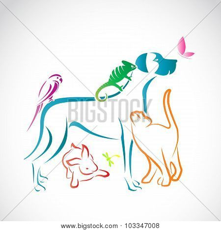 Vector Group Of Pets - Dog, Cat, Parrot, Chameleon, Rabbit, Butterfly, Dragonfly Isolated On White B