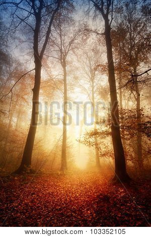 Fascinating Light In A Foggy Forest