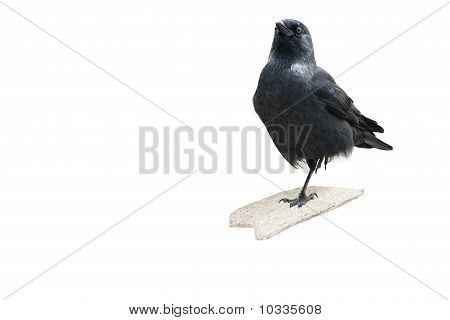 Black Bird On One Leg