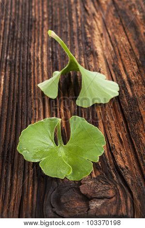 Ginkgo Biloba On Wooden Background.