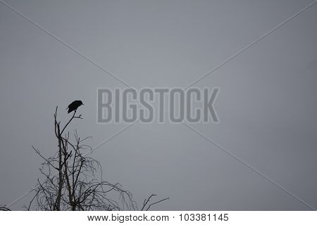 Cloudy Day: Crow on a Tree