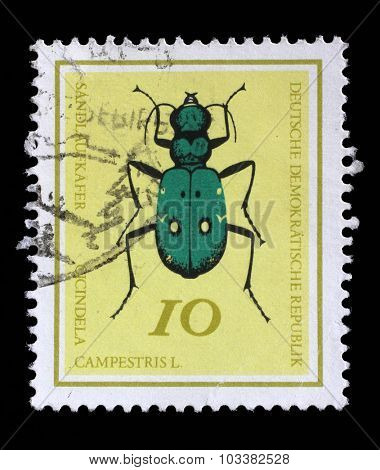 GERMAN DEMOCRATIC REPUBLIC - CIRCA 1968: A stamp printed in Germany from the Useful Beetles issue shows Green Tiger beetle (Cicindela campestris), circa 1968.