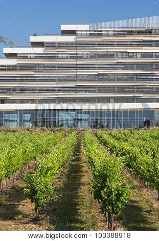 Vineyard Near Montpellier (france)