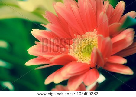 Red or Pink Flower
