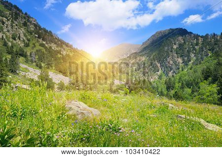 Mountains, Alpine Meadows And Sunrise