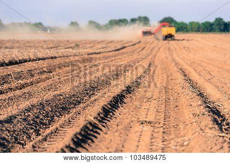 Potatoes harvering