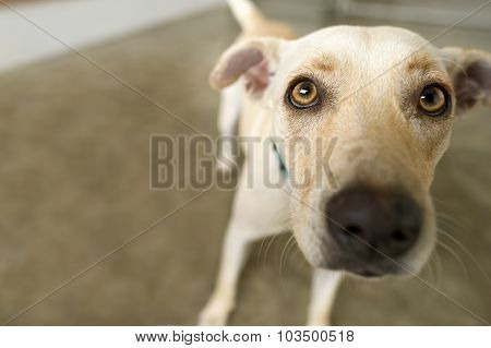Curious Dog Looking