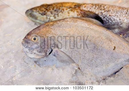 Thin Focus On Sea Fish Eye