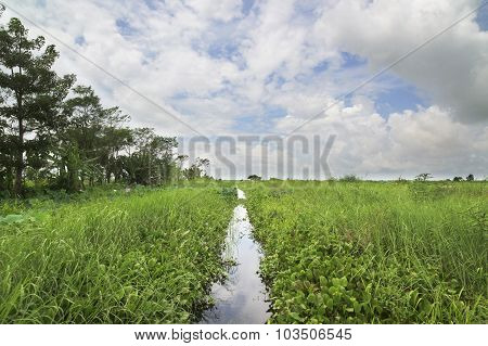 Narrow Canal Through A Swamp