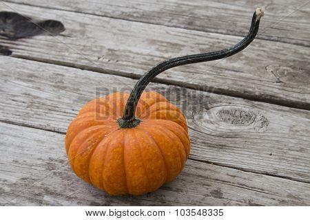 Small orange pumpkin with a long stem