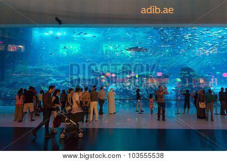 Dubai Aquarium, Colocated With The Dubai Mall, Draws Many Tourists From Around The World.