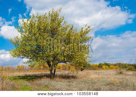 Apricot tree against blue cloudy sky at autumnal season