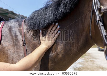 Close Up Of Horse Being Patted By A Young Woman