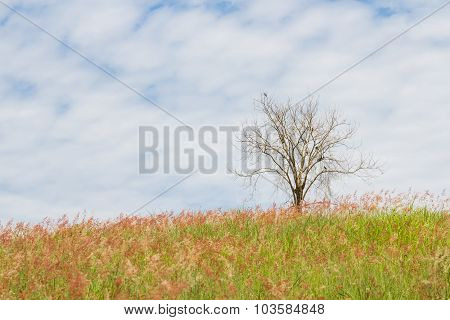 Dry Tree On The Field And Sky