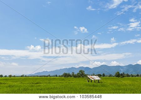 Field Of Summer Grass And Mountain