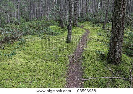 Gabriola Island Forest Trail