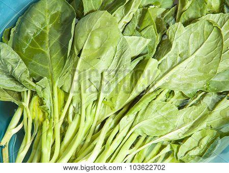 Chinese Kale