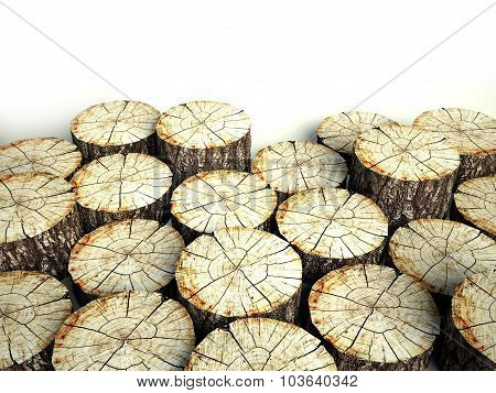 Felled Tree Stumps, Background And Copyspace