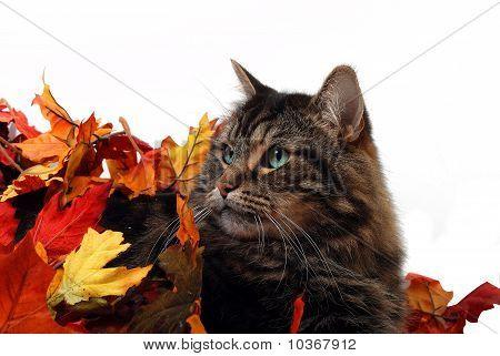 Cute fall cat
