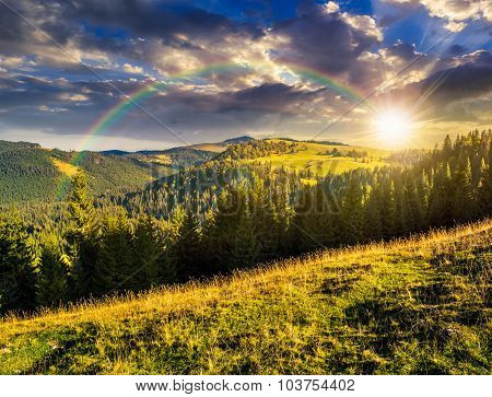 Coniferous Forest In Romaninan Mountain  At Sunset