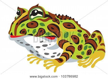 Pac-man horned frog