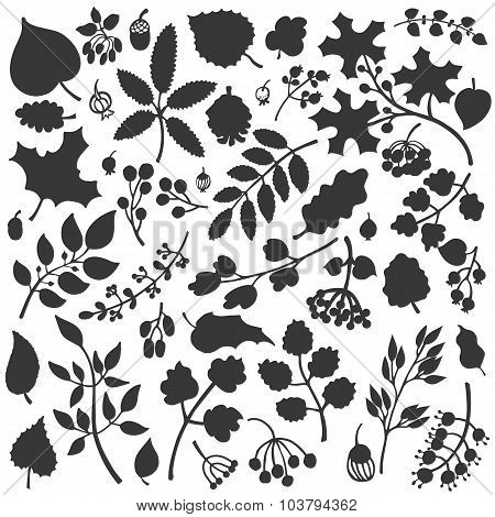 Autumn leaves,branches,berries set.Fall silhouette