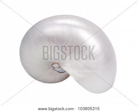 Seashell Vertical