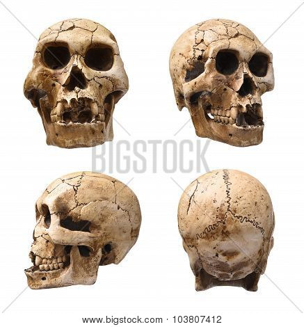 Collection of human skull isolated on white poster