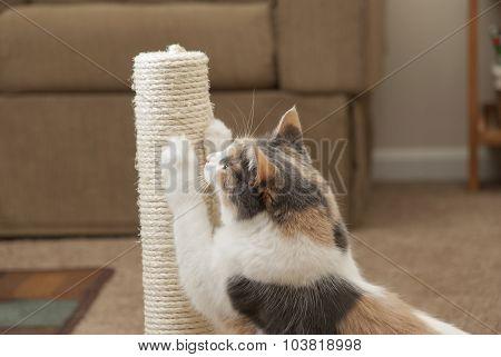 Cat using scratching post - closeup