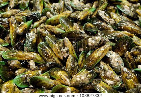 Group of green lip mussels on display in fishermen market. Close up