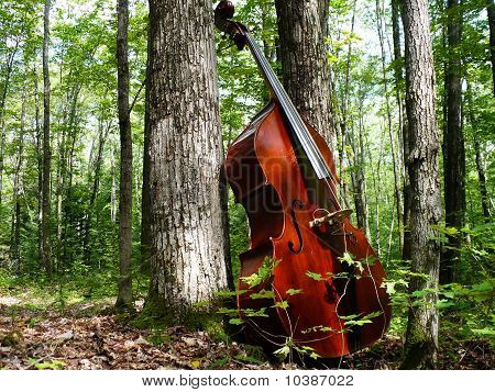 Double Bass in Nature