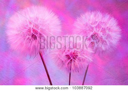 Colorful pastel background - Vivid color abstract dandelion flower - extreme closeup with soft focus beautiful nature details poster