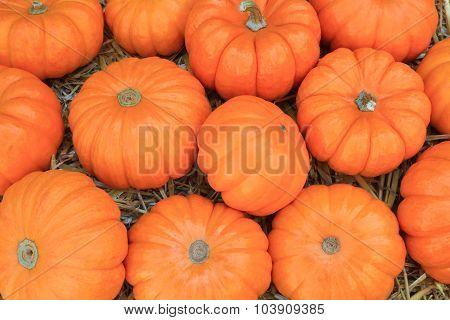 Thanksgiving Pumpkins Symbols