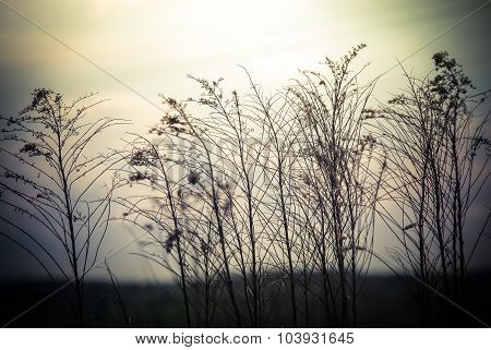 Abstract nature background with wild flowers and plants silhouettes at foggy mysterious sunrise. Early morning over the meadow at misty autumn. Blur effect poster