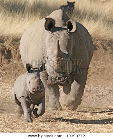 rhino mother and child