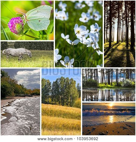 Collage on the theme of summer